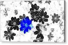 Focal Black And White Beauty Acrylic Print by Kim Galluzzo Wozniak