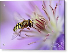 Focussing Acrylic Print by LHJB Photography