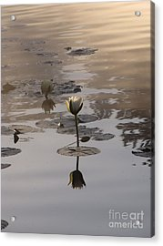 Fog And Reflections Acrylic Print