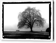 Foggy Day H-4 Acrylic Print by Mauro Celotti