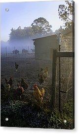 Foggy Florida Farm Morning Acrylic Print
