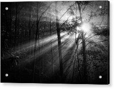 Foggy Forest Acrylic Print by Matt  Trimble