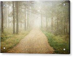 Foggy Forest Acrylic Print