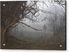 Foggy Horse Acrylic Print