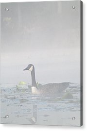 Acrylic Print featuring the photograph Foggy Morning Goose by Gerald Strine
