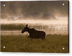 Foggy Stroll Acrylic Print