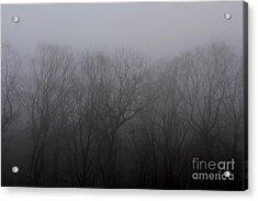 Foggy Treeline Acrylic Print by Lee Dos Santos