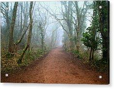 Foggy Woodland Trail Acrylic Print by Julie L Hoddinott