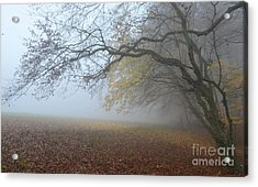 Fogy Forest In The Morning 1 Acrylic Print by Bruno Santoro