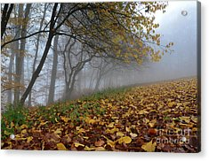 Acrylic Print featuring the photograph Fogy Forest In The Morning 2 by Bruno Santoro