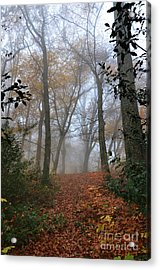 Fogy Forest In The Morning 3 Acrylic Print