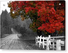 Foliage And Black And White Acrylic Print by Tammy Collins
