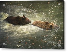 Acrylic Print featuring the photograph Follow Me by Roy  McPeak