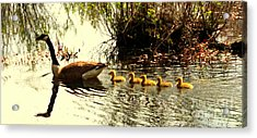 Follow Mom Acrylic Print