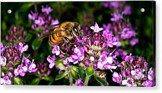 Follow The Bee Acrylic Print by Terry Elniski