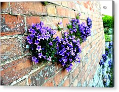 Follow The Flower Brick Wall Acrylic Print by Rene Triay Photography