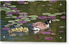 Acrylic Print featuring the photograph Follow The Goose by Mary Zeman