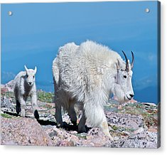 Acrylic Print featuring the photograph Following Momma by Stephen  Johnson