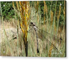 Acrylic Print featuring the photograph Food Chain by Michelle H