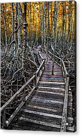 Footpath In Mangrove Forest Acrylic Print