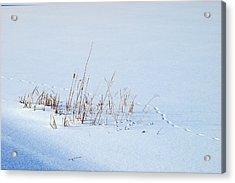 Footprints On Snow Acrylic Print by Paul Ge