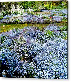 For-get-me-never Acrylic Print by Shirley Sirois