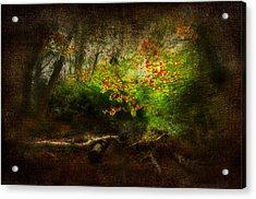 Forbidden Woods Acrylic Print by Svetlana Sewell