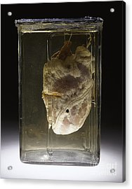 Forensic Evidence, Heart Perforated Acrylic Print by Science Source