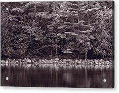 Forest At Jordan Pond Acadia Bw Acrylic Print by Steve Gadomski