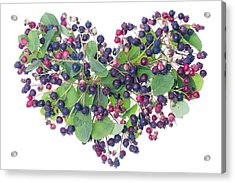 Forest Berries Heart Acrylic Print by Aleksandr Volkov
