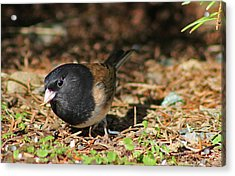 Acrylic Print featuring the photograph Forest Bird by Tyra  OBryant