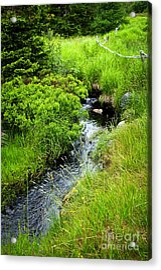 Forest Creek In Newfoundland Acrylic Print by Elena Elisseeva