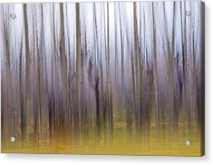 Forest Dream Acrylic Print