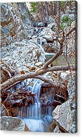 Forest Falls Acrylic Print