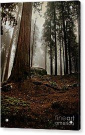 Forest Floor And Fog Acrylic Print