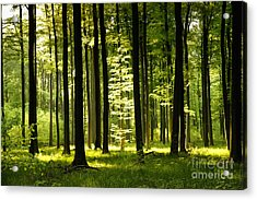 Forest Idyll Acrylic Print by Renate Knapp
