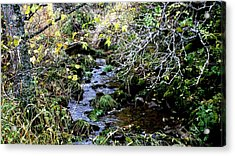 forest in Leon Acrylic Print by Luis and Paula Lopez