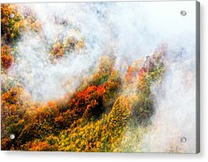 Forest In Veil Of Mists Acrylic Print by Evgeni Dinev