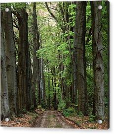 Forest Lane Acrylic Print