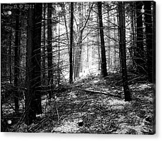 Acrylic Print featuring the photograph Forest by Lucy D