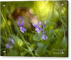 Forest Meadow Acrylic Print by Angel  Tarantella