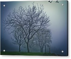 Forest Mist Acrylic Print by Jason Naudi Photography