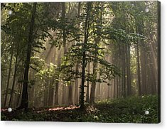 Acrylic Print featuring the photograph Forest by Odon Czintos