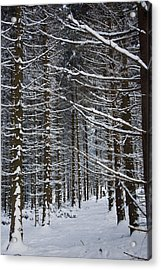 Forest Of Marburg In Winter Acrylic Print by Axiom Photographic