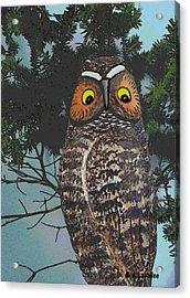 Forest Owl Acrylic Print