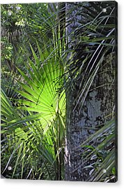 Forest Palm Acrylic Print by Lou Belcher