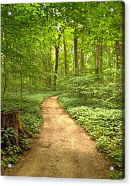 Forest Path Acrylic Print by Coby Cooper