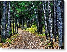 Forest Path In Autumn Acrylic Print by Matthew Winn