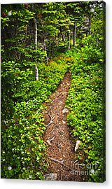 Forest Path In Newfoundland Acrylic Print by Elena Elisseeva