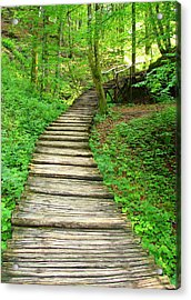 Acrylic Print featuring the photograph Forest Path by Ramona Johnston